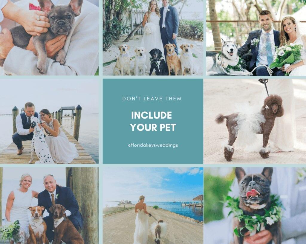 Destination Wedding Pets